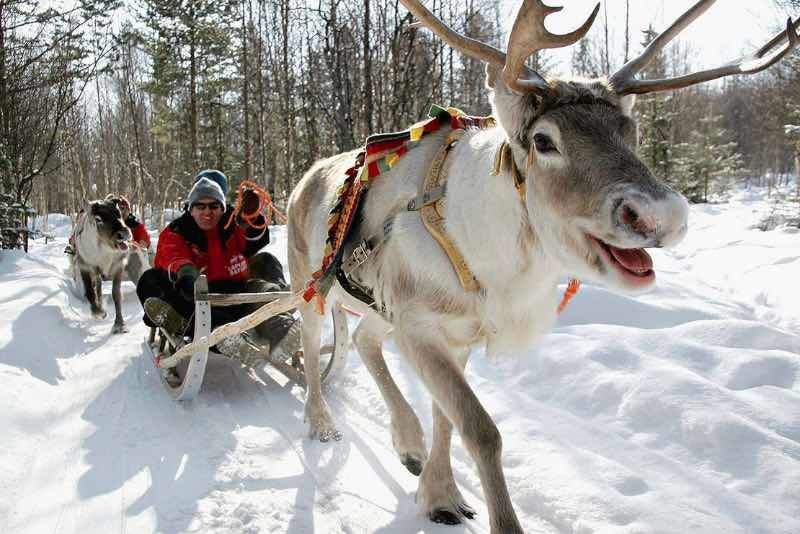 Rovaniemi-safari.jpg